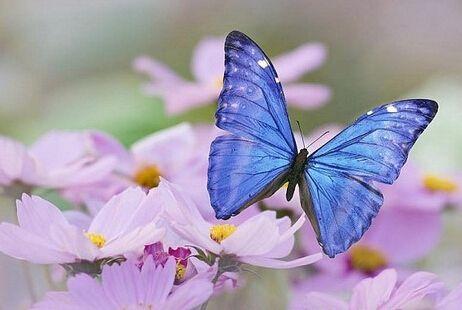 幼儿园小班美术教案 美丽的蝴蝶