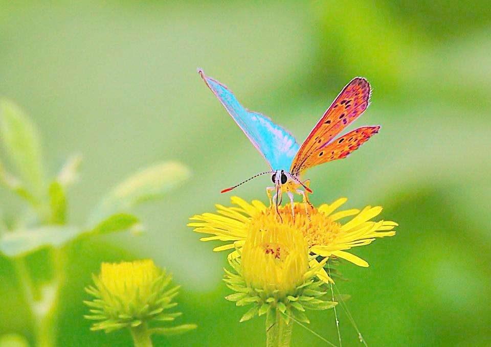 幼儿园美术教案 蝴蝶与花